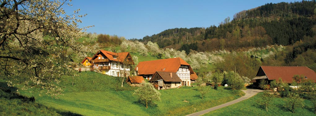 Black forest holiday houses